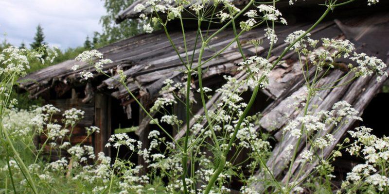 Вымирание русских деревень